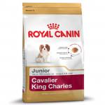 RC Cavalier King C. JUNIOR 1,5KG